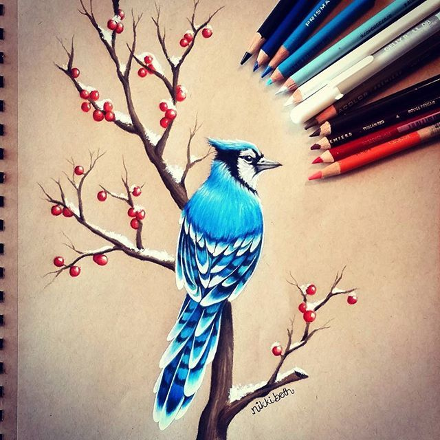 Drew a little winter blue jay. ❄ I'm snowed in right now and I FINALLY found some motivation. I feel better now. I used Prismacolor pencils on Strathmore Toned Tan paper.