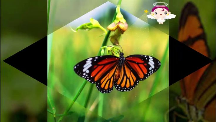 world's most Butterfly compilation #Beautiful & Colorful Butterfly videos 1