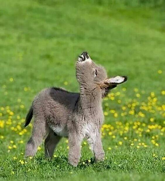 df248830e9c68bacc74cba17ca4675a2--animal-babies-baby-animals.jpg