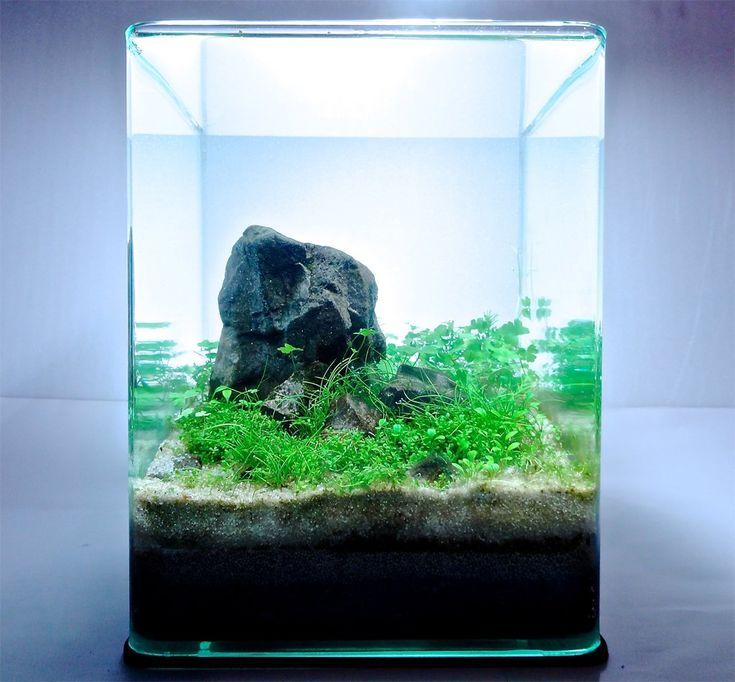 10L Iwagumi par Marlou. #aquascaping #aquarium