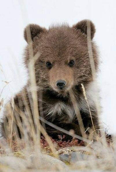 Little bear~