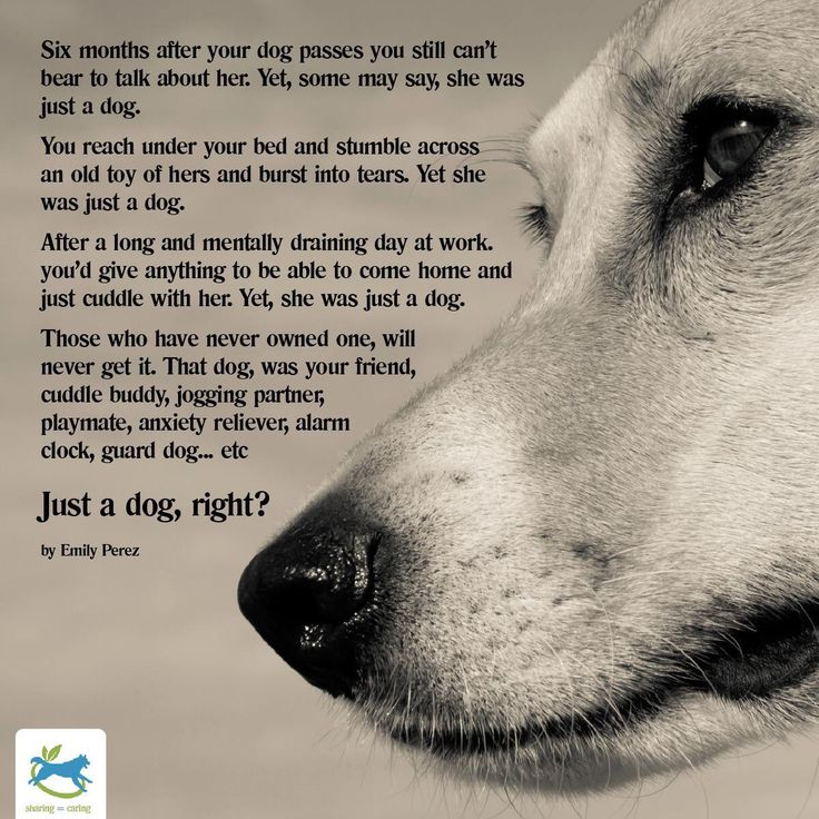 "They are never ""just a dog"". . ."