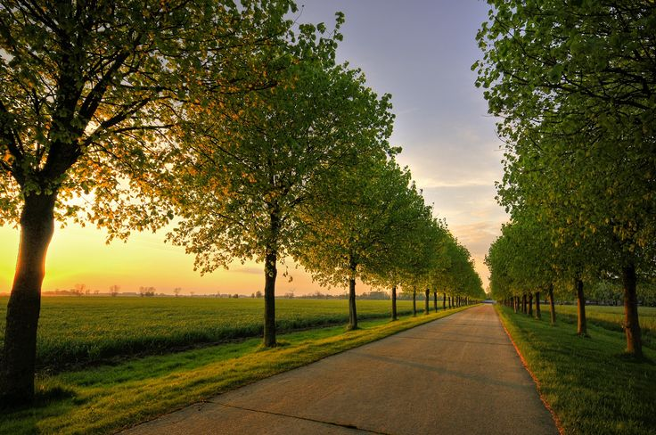Straight Home - Typical Dutch Landscape, The Netherlands