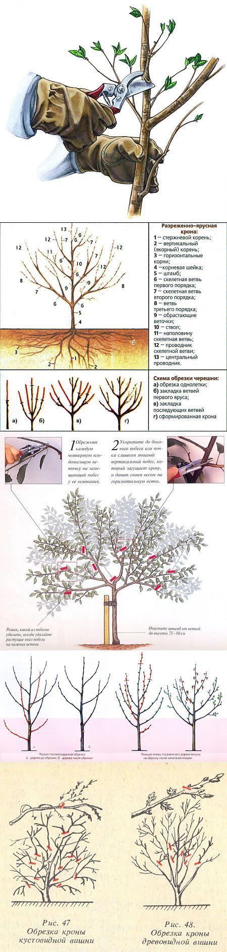 Обрезка вишни и черешни осенью. | Сад и огород | Постила