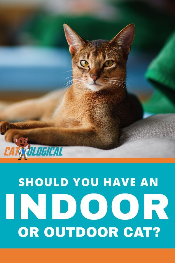 Should You Let Your Cat Outside Indoor Vs Outdoor Cats How To Decide Cat Care Cat Parenting Cats Outside