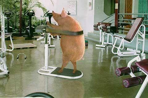 Fogyasztó edzés