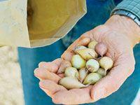 Three Ways to Plant Onions  http://www.rodalesorganiclife.com/garden/three-ways-plant-onions