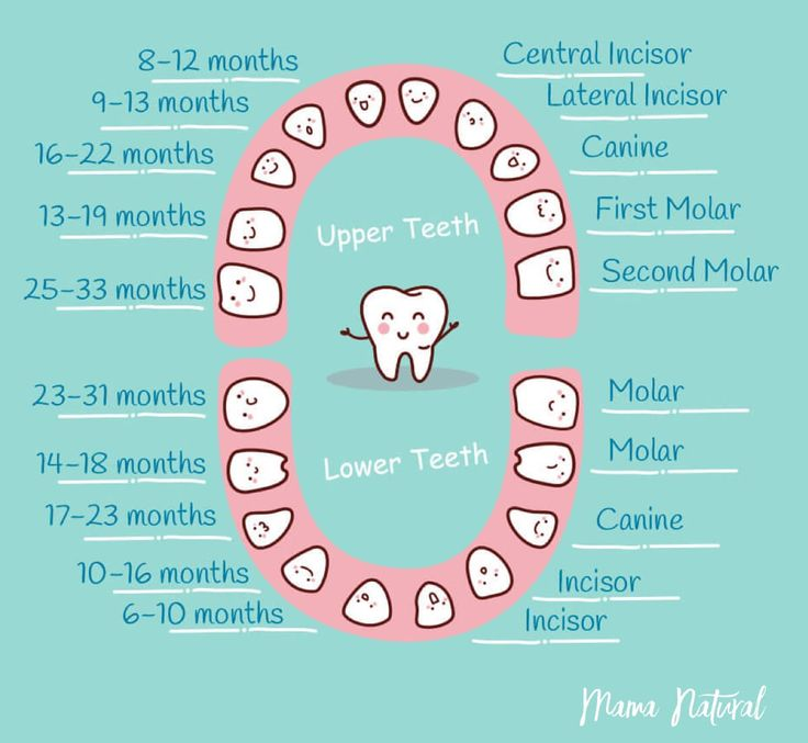 Best  Baby Teeth Order Ideas On   Pregnancy Growth