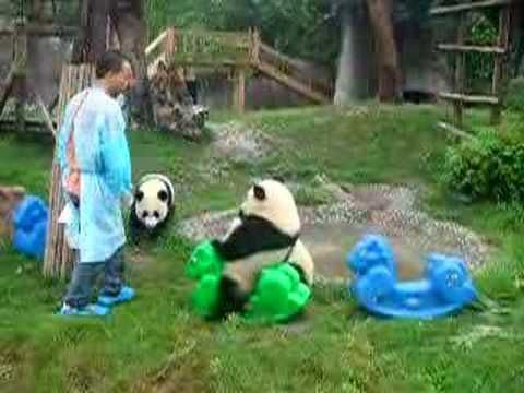 Have u ever seen a panda on a pony? - YouTube