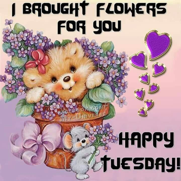 Happy Tuesday good morning tuesday tuesday quotes good morning quotes happy tuesday good morning tuesday quotes happy tuesday morning tuesday morning facebook quotes tuesday image quotes happy tuesday good morning