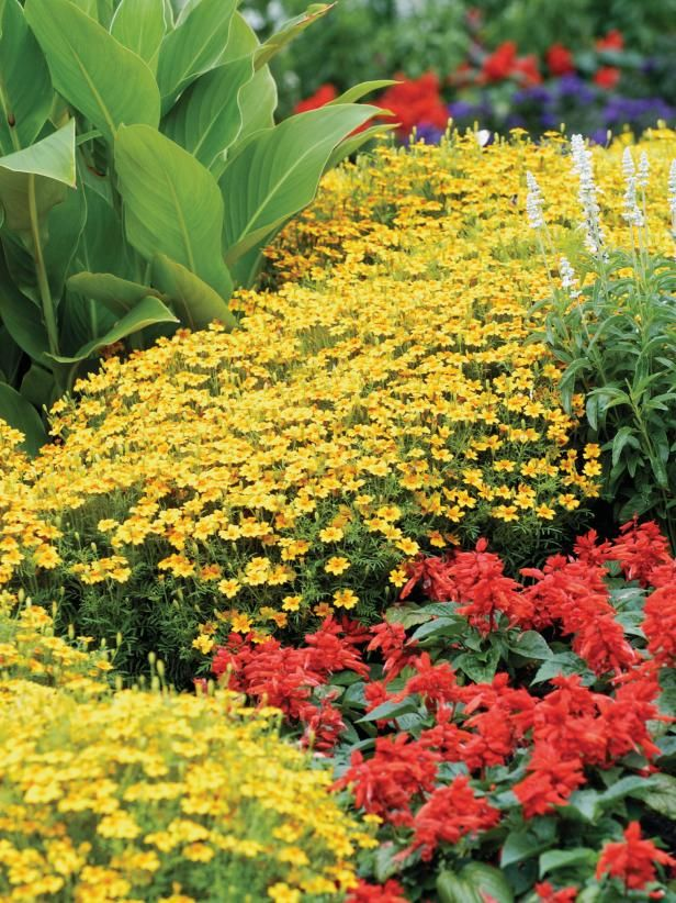 Learn how to choose shade-tolerant plants for your garden from the experts at HGTV.com.
