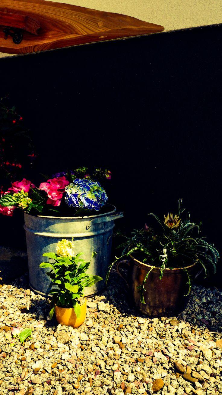 Rabatki-kwiatki.