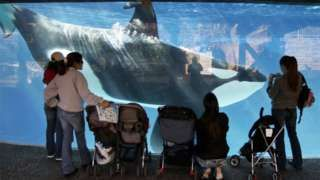 SeaWorld Admits Its Employees Spied on Animal Rights Groups - The revelation came out after a SeaWorld San Diego staff member was discovered to be posing as an activist. http://www.bbc.com/news/world-us-canada-35662207
