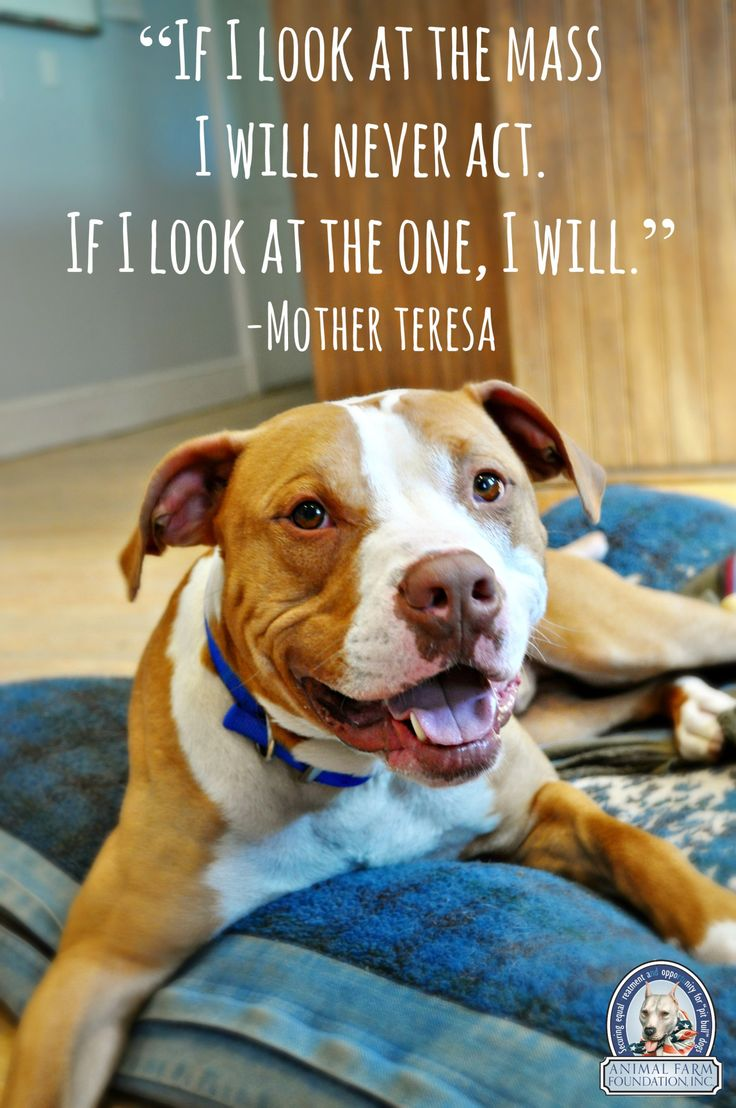 Pitbull Dog Quotes 82 Best Pit Bull Images On Pinterest  Pitbull Pit Bulls And Puppies