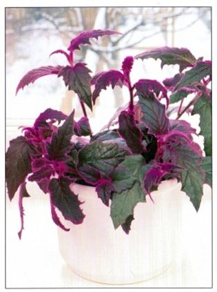 Good ... Flowering House Plants Purple