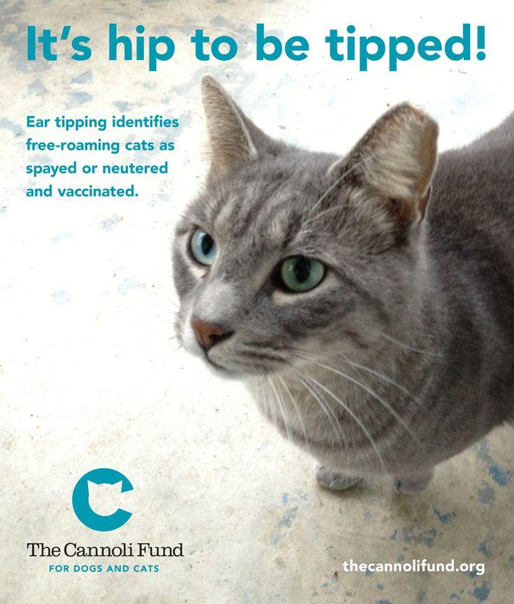 Free Cat Traps
