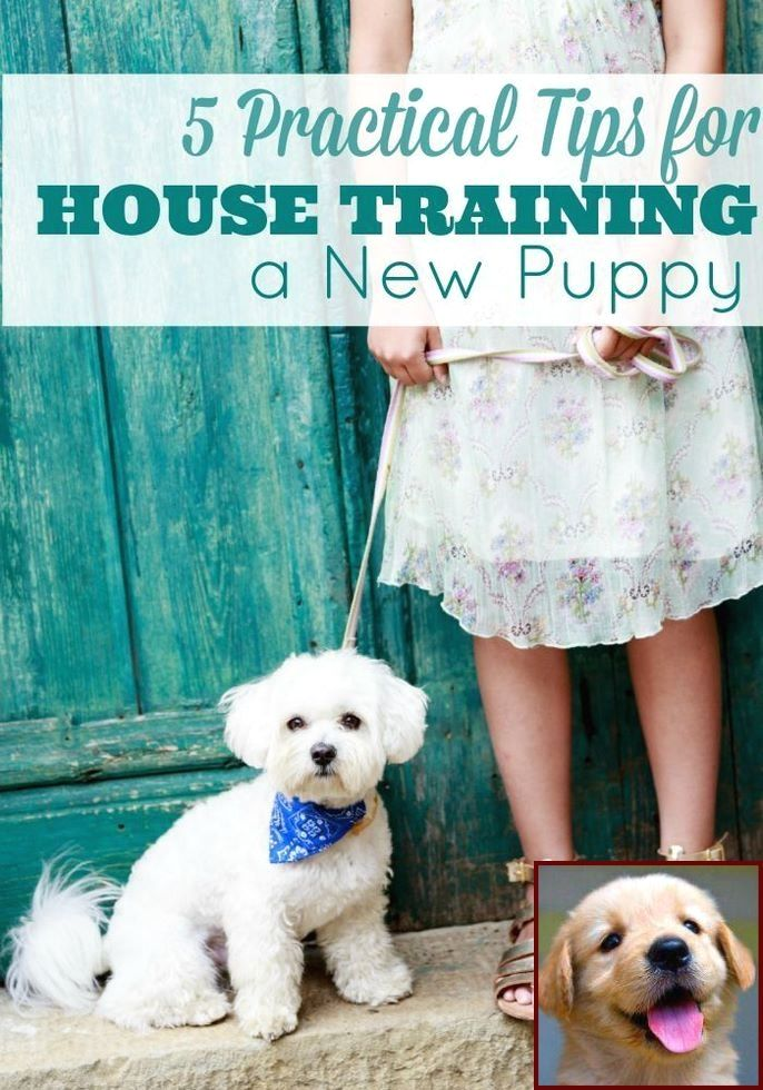 1 Have Dog Behavior Problems Learn About House Training A Jug