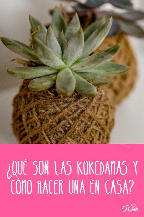 kokedamas colgantes Mallow Cup Recipe, Mallow Cups, Cactus Y Suculentas, Succulents, Basket, Fruit, Green, Diy, Plants