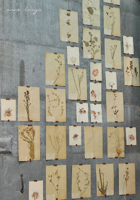 botanical wall, going to do this one day for the Adored Vintage studio