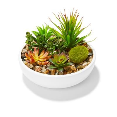 Image for Mixed Succulents In Pot from Kmart $15.00