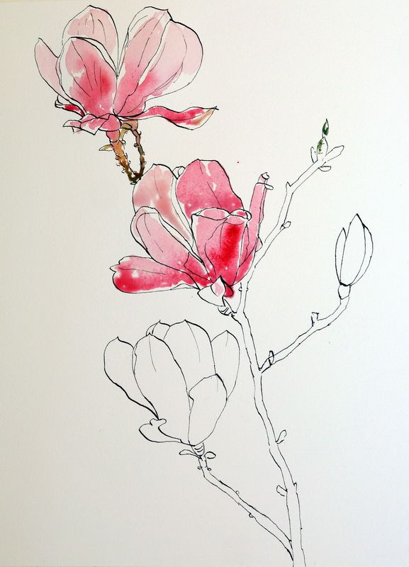 Ellsworth Kelly ,  pink magnolias pen ink and wash painting