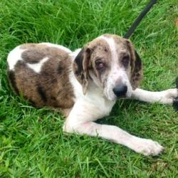 Leash On Life Dog Rescue Sc