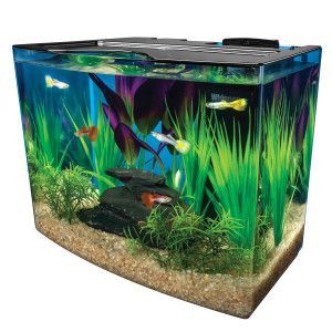 90 best plants snails images on pinterest fish aquariums for Betta fish tanks amazon