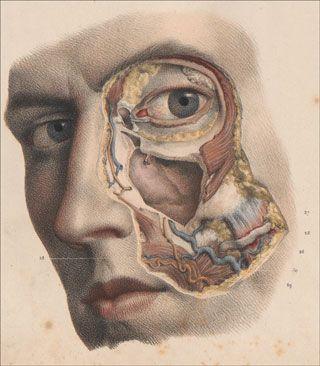 Traité complet de l'anatomie de l'homme: comprenant la médicine opératoire - Jean Baptiste Marc Bourgery, Nicolas Henri Jacob, Paris, 1840