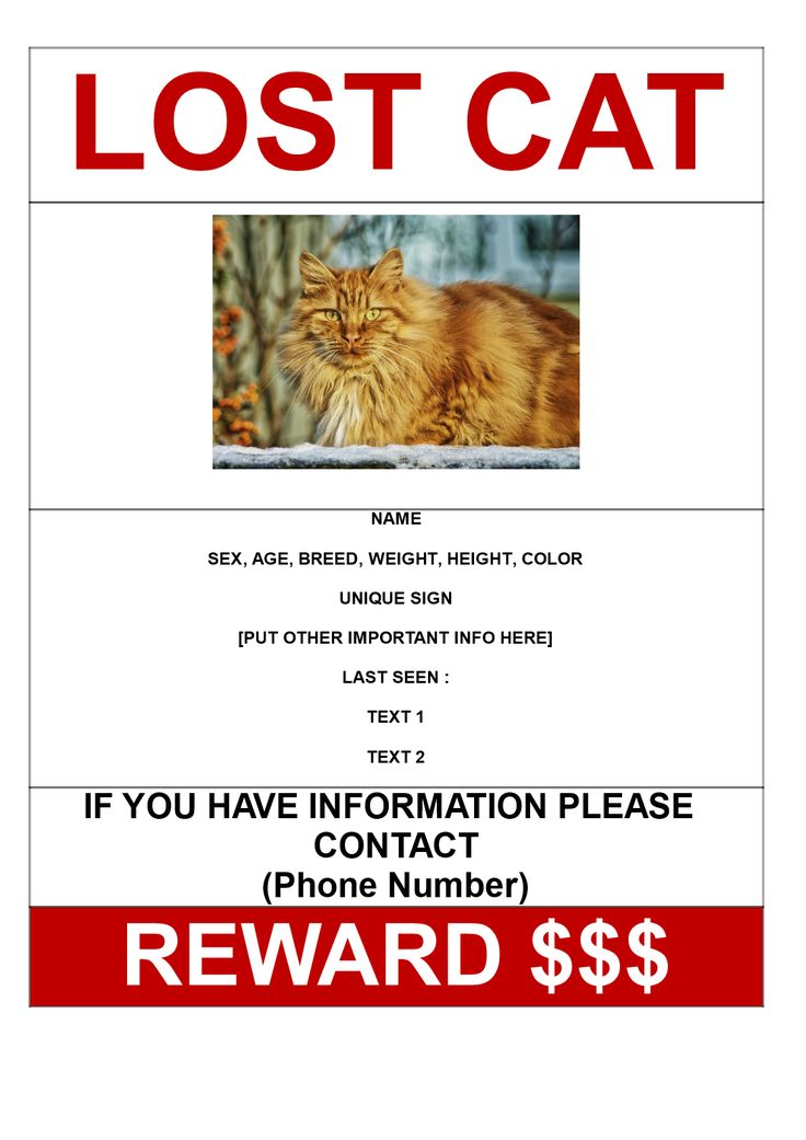 Lost Cat with Reward Model A3 template - Download this Lost Cat with Reward Model A3 poster template if you are looking for a missing cat and need help from other people in your search. Good luck!