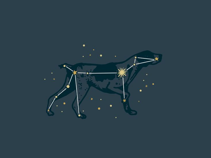 "Canis Major Constellation; ""Dog Star"" . I want to get the name of this as a tattoo for my pup"