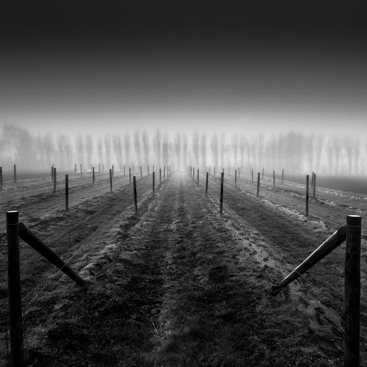 Fog by @Bill Hughes Allen