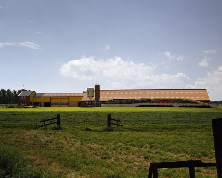 Nieuwbouw veehouderij Harich - Jelle de Jong architekten