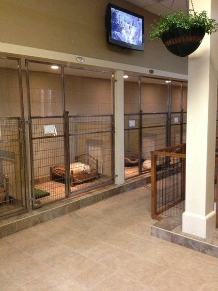 30 Best Images About My Future Animal Shelter On Pinterest