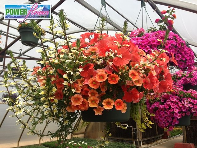 Range Flower Baskets : Best images about hot hanging baskets on