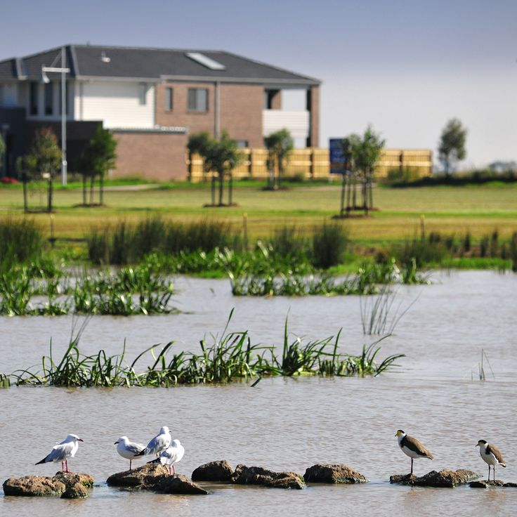 Featherbrook is home to three wetland areas, which create picturesque places that attract local bird life. #featherbrook #pointcook