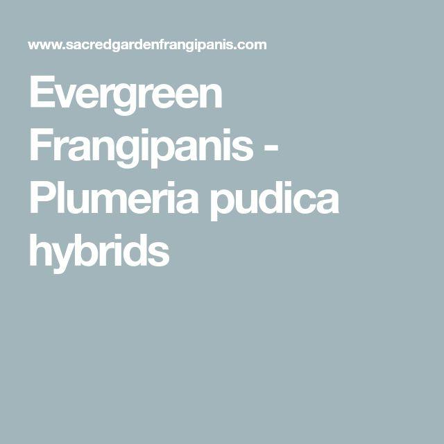 Evergreen Frangipanis - Plumeria pudica hybrids