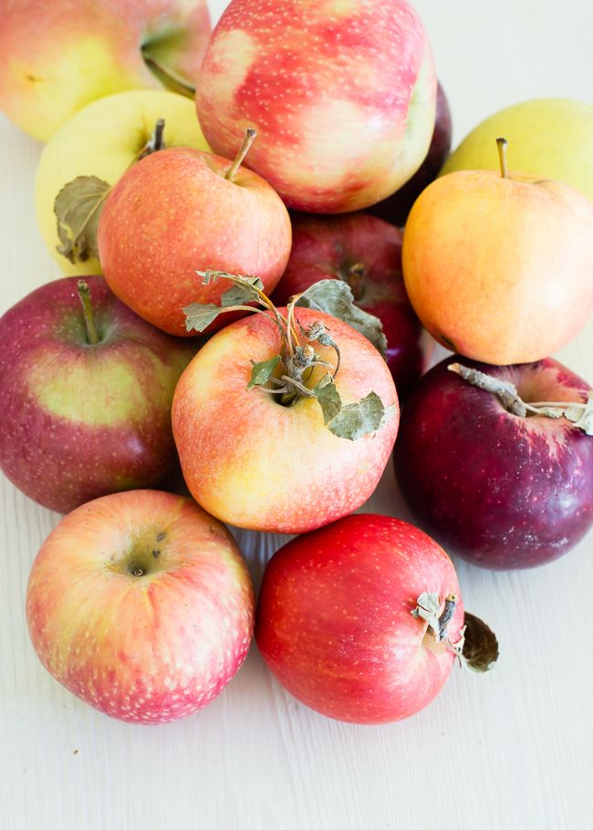 A quick, helpful apple variety guide for eight popular varieties plus great apple recipes to enjoy this fall.