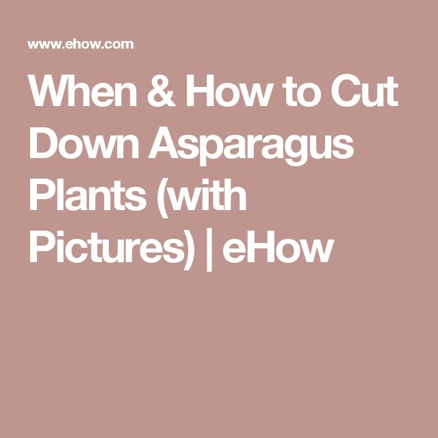 When & How to Cut Down Asparagus Plants (with Pictures) | eHow