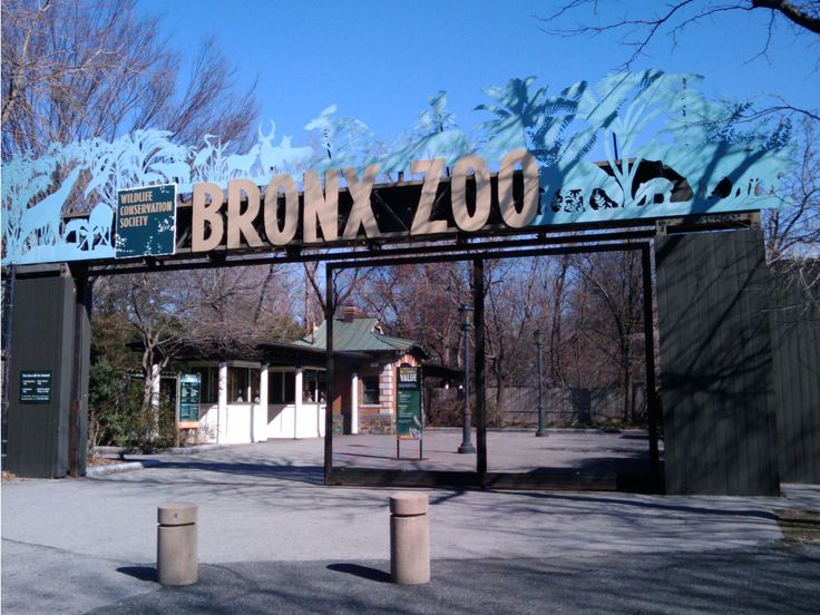 Where to Eat Near the Bronx Zoo