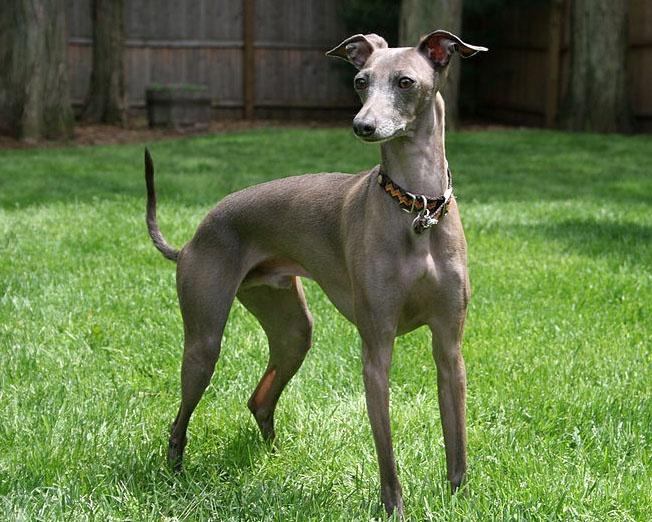 79 best Dogs: Hounds images on Pinterest   Dog breeds ...