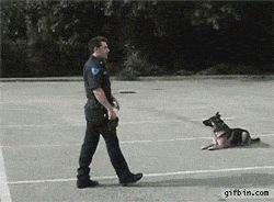 Police Dog Gets Into Police Car