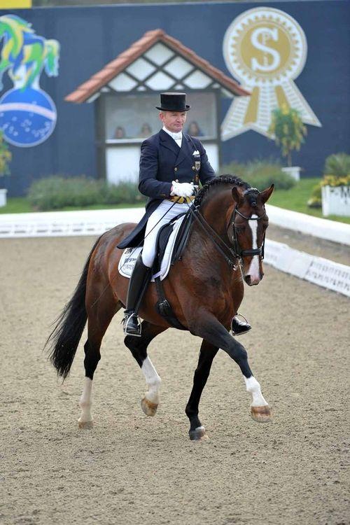 Estobar NRW「Ehrentusch x Florence」  Westphalian Stallion