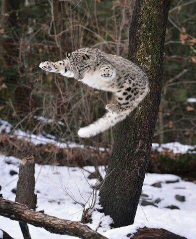 Wheeeeee woooohoooo I can fly!!!