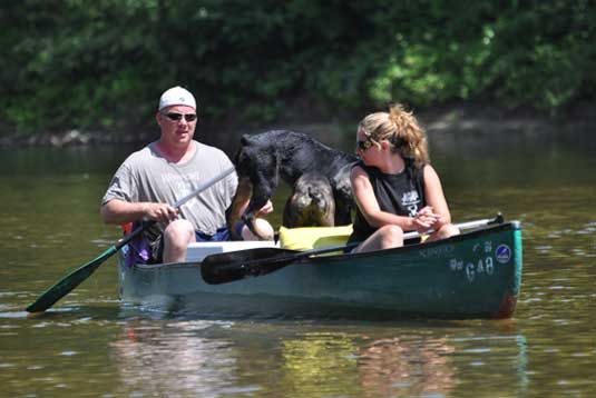 Saco river canoe rentals - Lansing painting with a twist