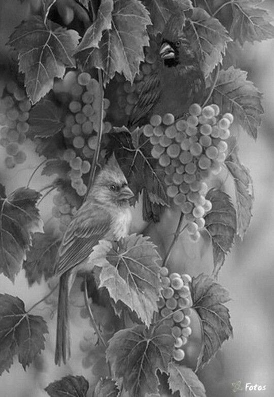 17 Best Images About Grayscale On Pinterest Coloring