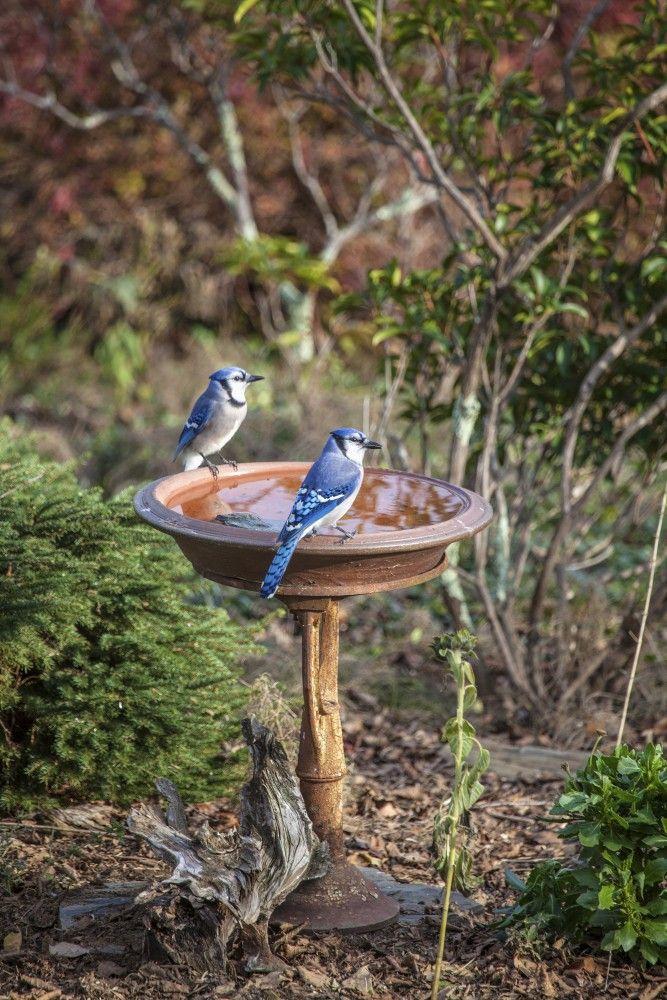 License Plate Bird Feeder