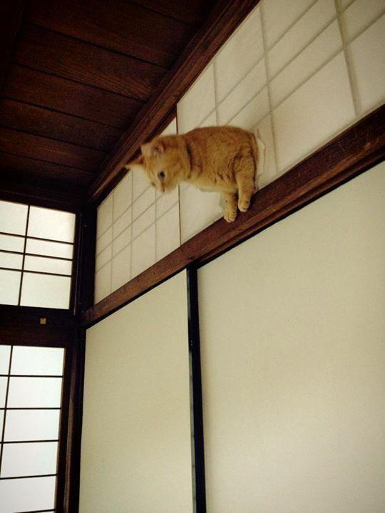 予想外の場所から障子を突き破る猫wwwwwwwwww