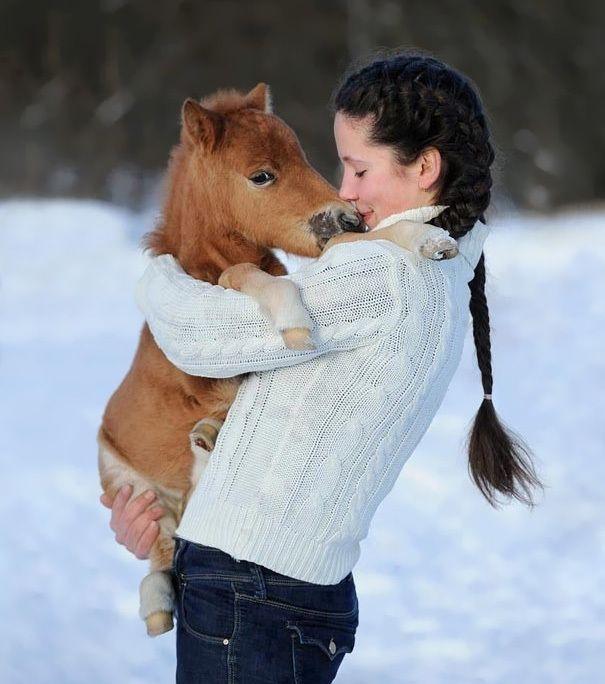 14 images qui vont vous faire aimer les chevaux miniatures