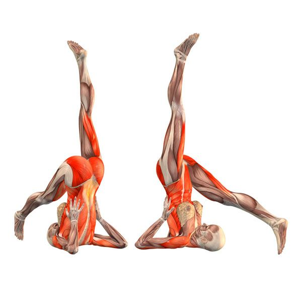 Supported shoulderstand, right leg behind head - Utthita Sarvangasana right - Yoga Poses | YOGA.com