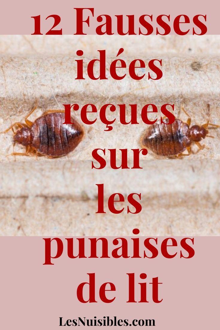 12 Fausses Idees Recues Sur Les Punaises De Lit Puce De Lit Punaise